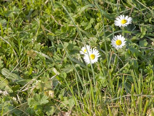 todas estas flores contienen numerosos azcares y de alguna manera potencian la vida hacindolo tambin con las personas a quin no llena de vida un campo